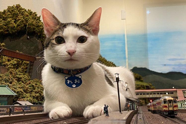 Kucing diorama KA