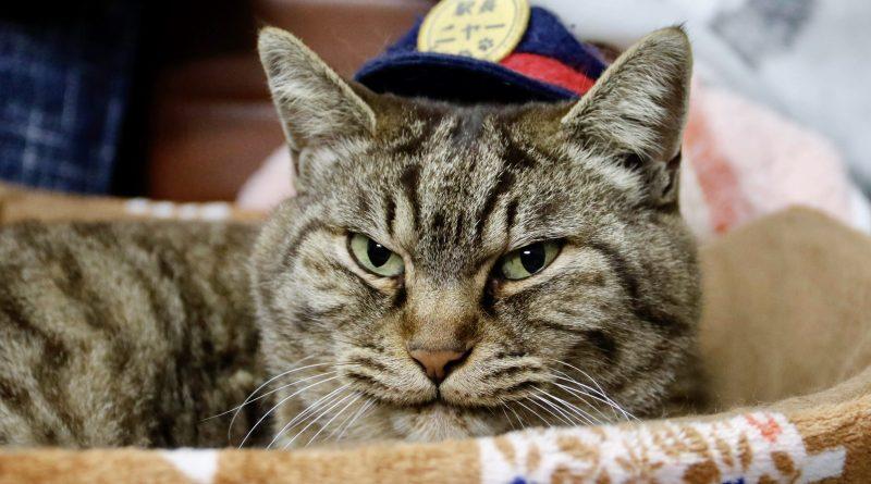 Kucing Kepala Stasiun di Kyushu Tewas Tertabrak Mobil